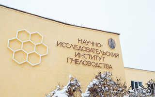 Курсы пчеловодства в тимирязевской академии