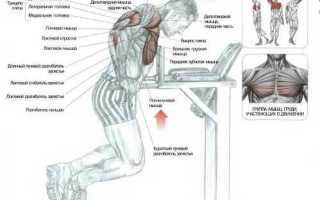 Отжимание на брусьях какие мышцы работают видео
