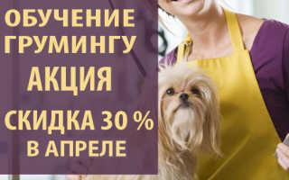 Уроки стрижки собак