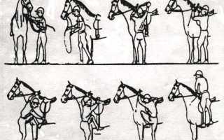 Лошади уроки верховой езды