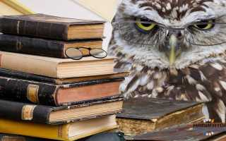 Кто пишет книги профессия