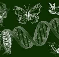 Подготовка к егэ по биологии книги