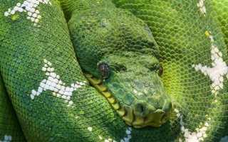 Python с нуля книга